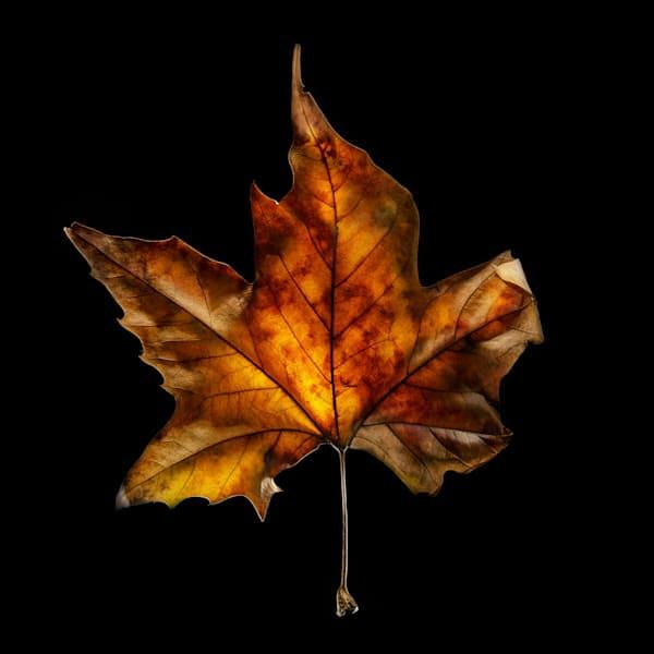 Fire Leaf V1 Photography Art | Ralph Palumbo