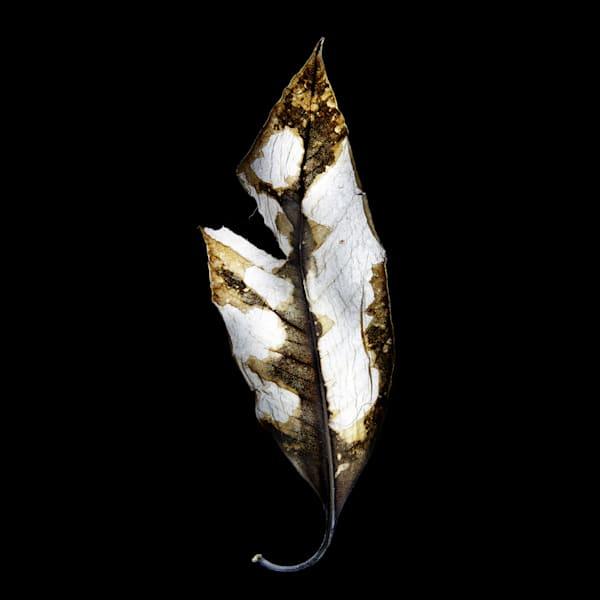 Fire Leaf V3 Photography Art | Ralph Palumbo