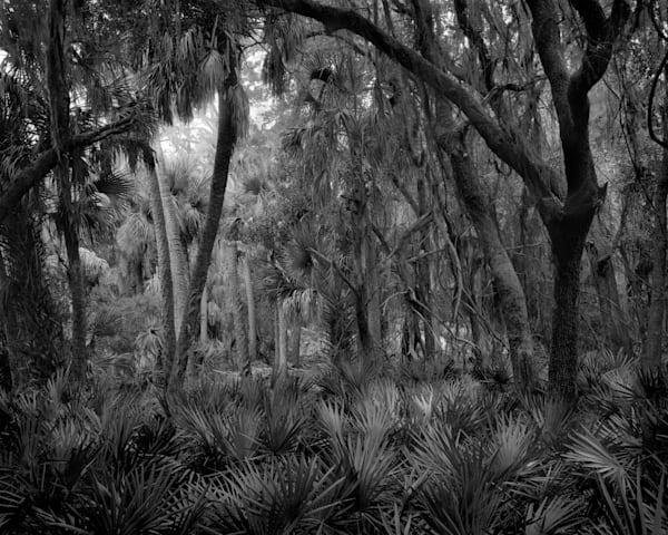 Where Snakes Live, Ossabaw Island, Georgia Photography Art | Rick Gardner Photography
