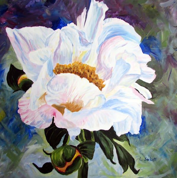 White Peony Art | Linda Sacketti