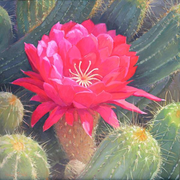 Cactus Flower 2 Art | Diehl Fine Art