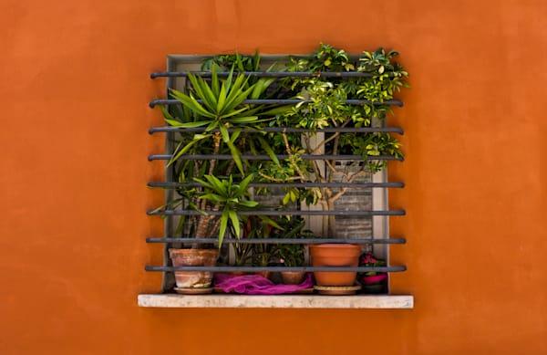 Window garden in orange wall, Fano, Italy