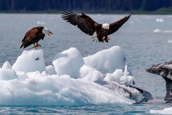Ice Landing