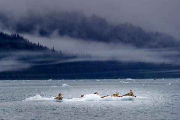 Seal Island Fog