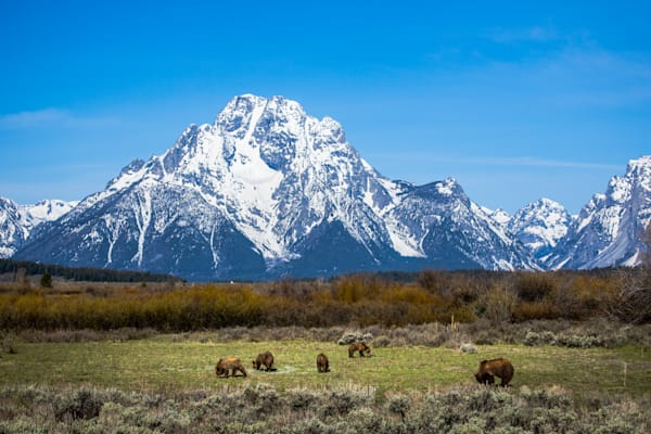 399 and Bear Cubs In Grand Teton