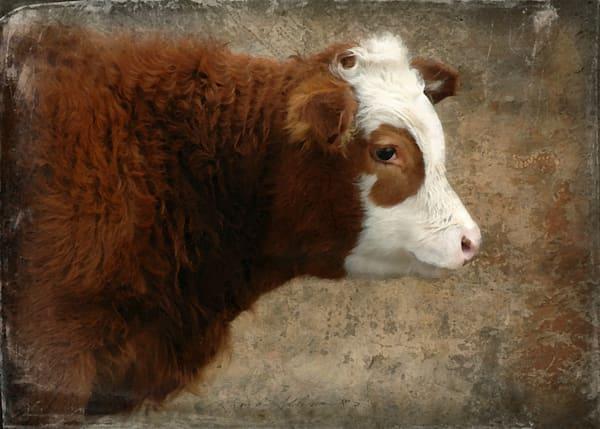 Jersey Cow Art
