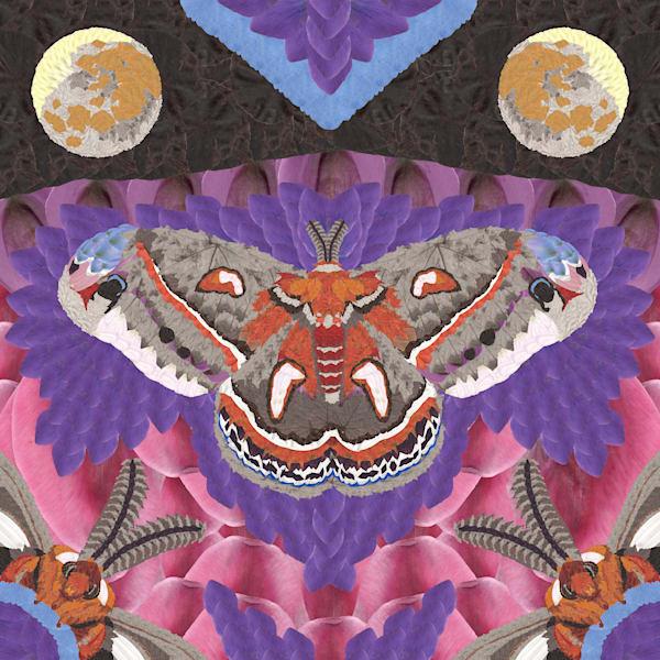 Moths Art | smacartist