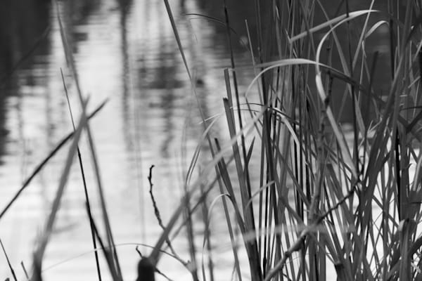 Water Weeds Wonder Photography Art | Ron Olcott Photography