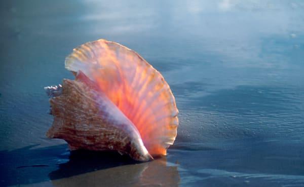 Sea Shell Portraits on the beach