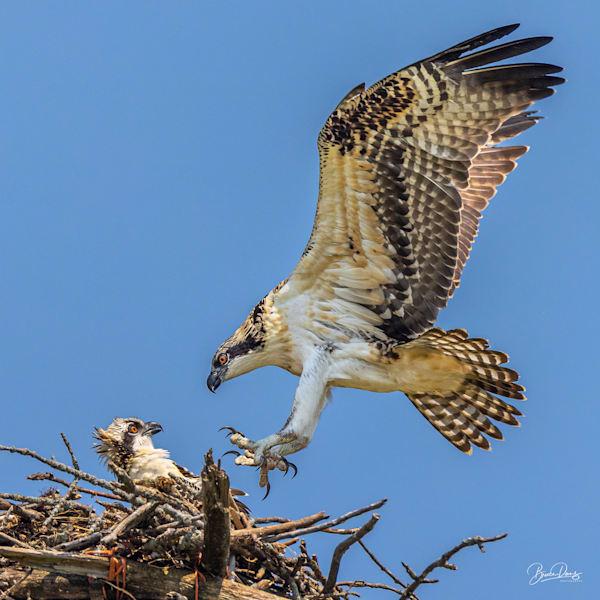 Osprey Surprise!