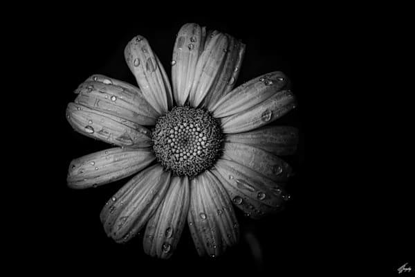 Floral Fine Art Photography - Flora & Darkness No1