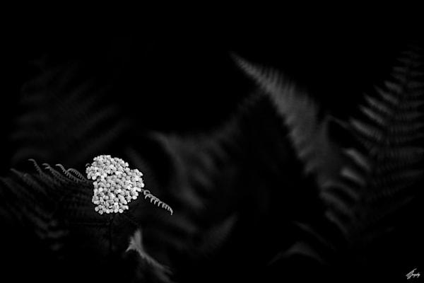 Floral Fine Art Photography - Flora & Darkness No2
