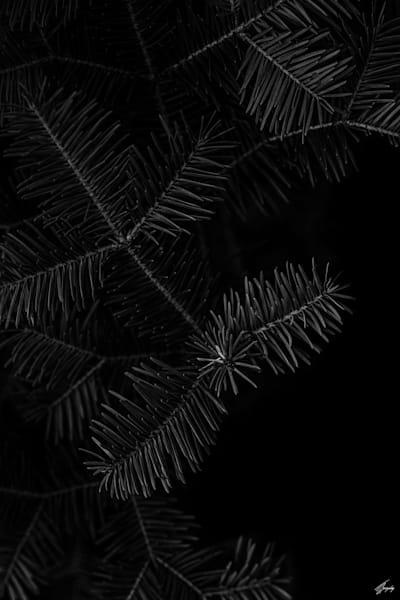 Floral Fine Art Photography - Darkness & Flora No4
