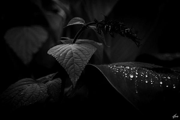 Floral Fine Art Photography - Darkness & Flora No6