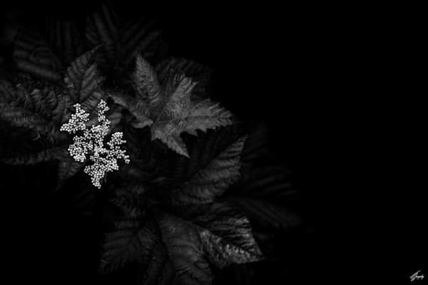 Floral Fine Art Photography - Darkness & Flora No9