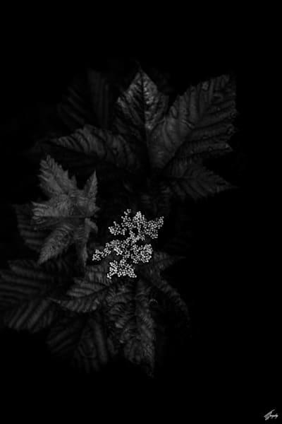 Floral Fine Art Photography - Darkness & Flora No10