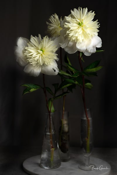 Peoniesstilllife Photography Art | Barb Gonzalez Photography
