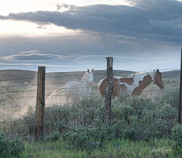 Wild Idahohorsessunset Photography Art | Barb Gonzalez Photography