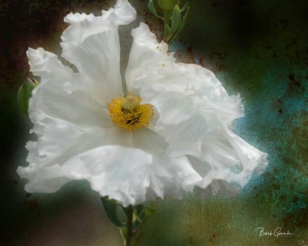 Whitepoppytexture Photography Art | Barb Gonzalez Photography