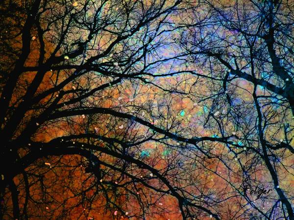 Kneeling Tree Art | Jacob Folger Artist
