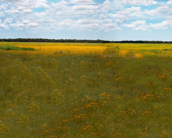 Meadow In Bloom Photography Art   It's Your World - Enjoy!