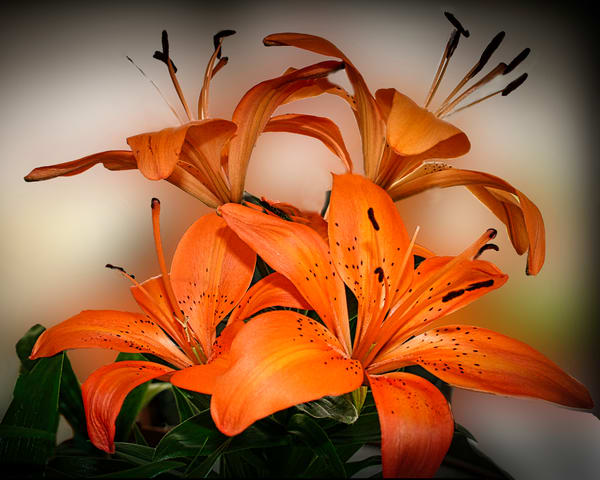 Tiger Lilly Photography Art   It's Your World - Enjoy!