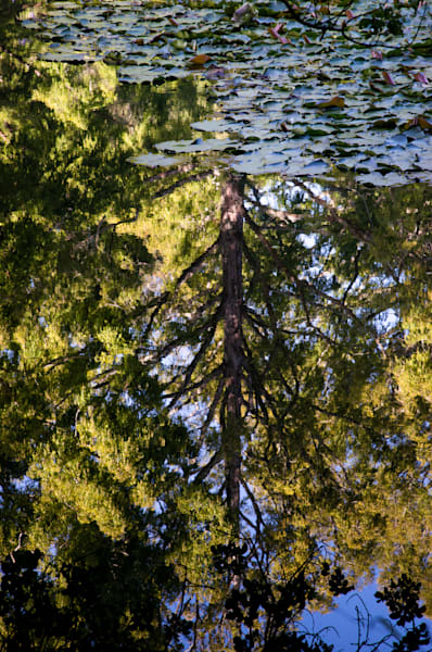 Pukekura Park lily pond abstract reflections, New Zealand