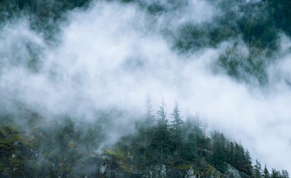 Misty winter forest landscape, British Columbia, Canada
