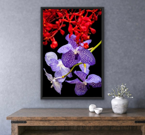 Orchidaceae No.16 | LUMINOS ART EDITIONS