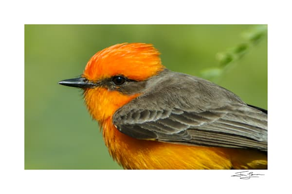 Art print of a red bird.