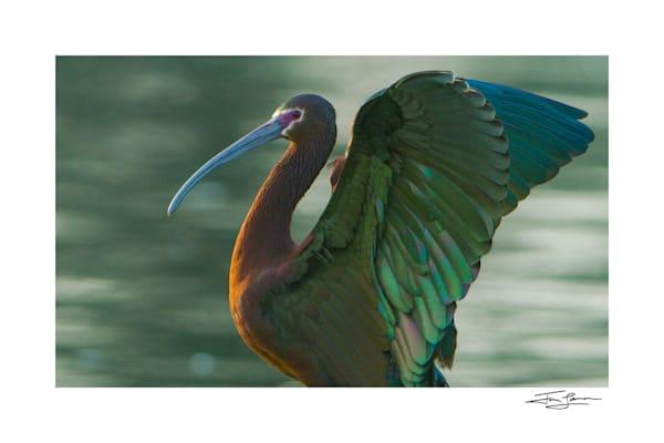 California Birds