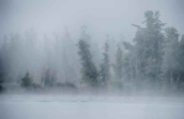 Foggy Forest of Elk Lake