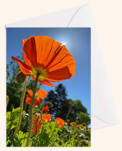 Sun Seeker Blank 5x7 Card