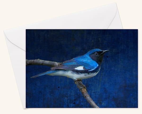 Black-Throated Blue Blank 5x7 Card