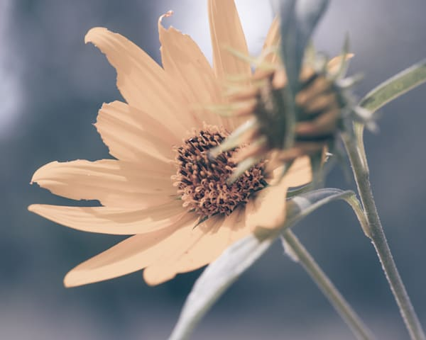 Soft Sun In The Summer Photography Art   Tamea Travels