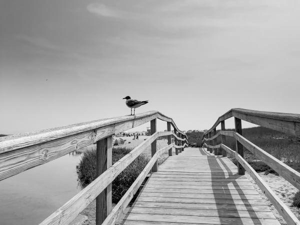The Bridge Photography Art   Nick Levitin Photography