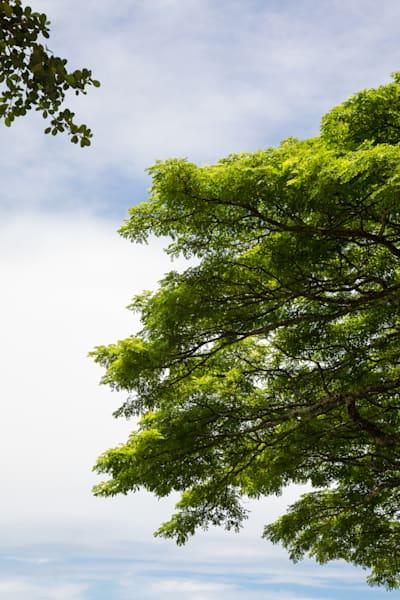 Touching Trees Photography Art | Leiken Photography