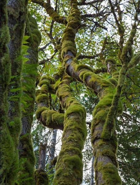 Growing On Trees 2 Photography Art | Leiken Photography
