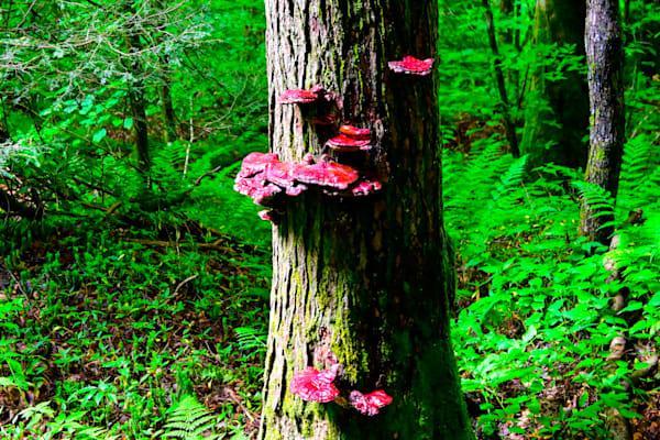 Brilliant Fungus Photography Art   Blue Ridge Zen