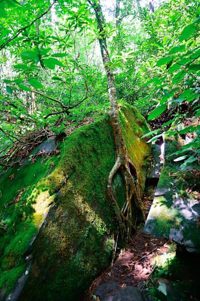 Tenacious Tree Photography Art | Blue Ridge Zen