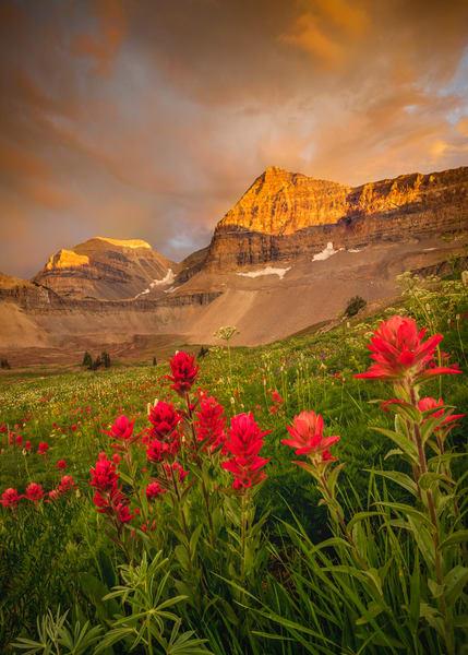 timp stormy wildflower sunset