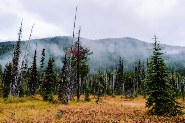 Meadow, Deep Creek Valley, Washington, 2016