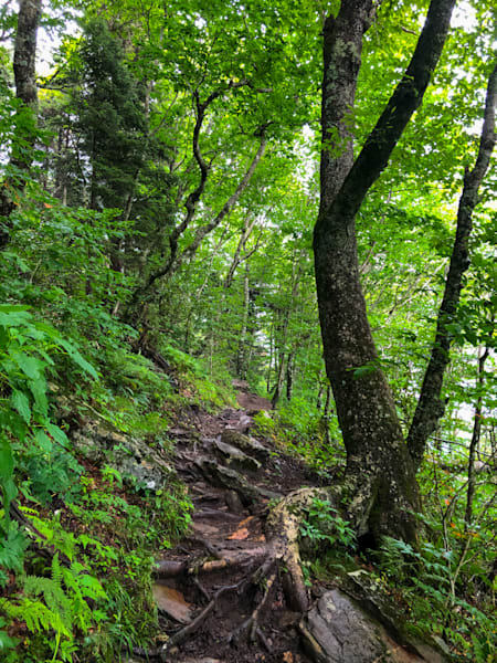 Forest Trail 2020 Photography Art | Blue Ridge Zen