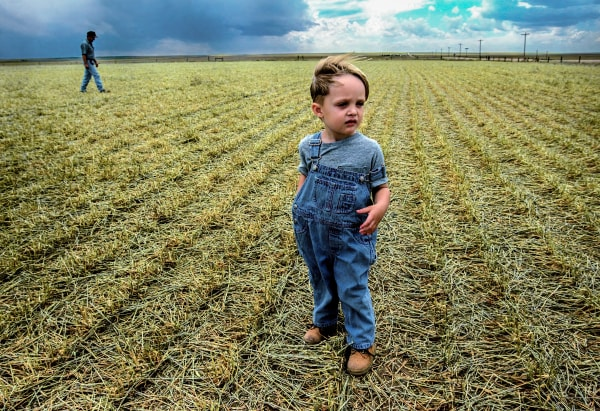 A boy and his dad investigate the damage after a hail storm destroyed their wheat field in northeastern Colorado