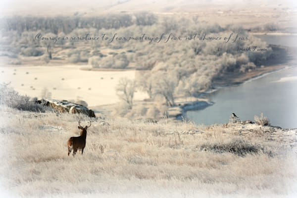 Deer and Magpie Art Photography