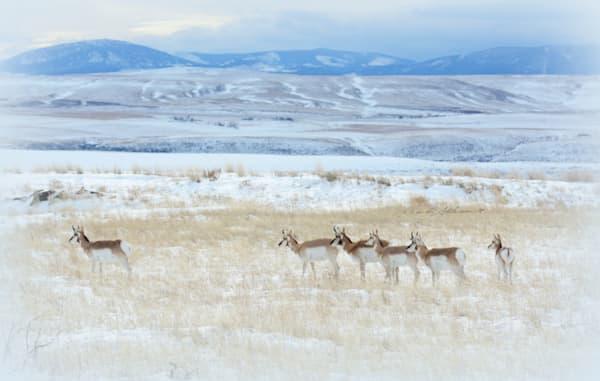 Antelope Art