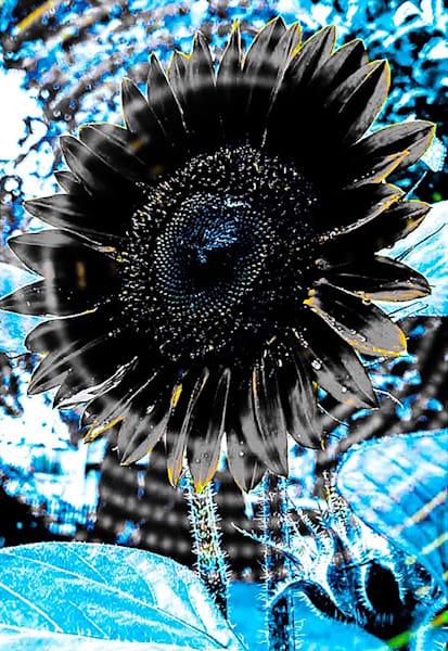 Sunflower Song Art | Sunrise Galleries