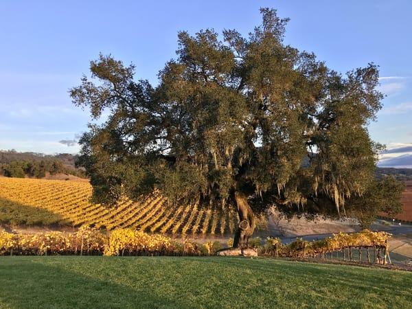 Autumn's Vines Art   Susan Searway Art & Design