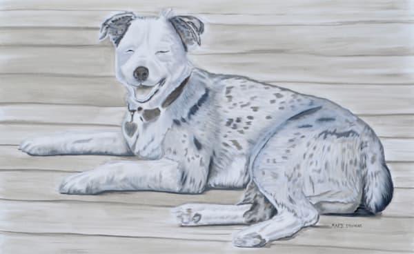 Smiling Eyes, Australian Shepherd, Original, Oil On Canvas Art   Marie Stephens Art