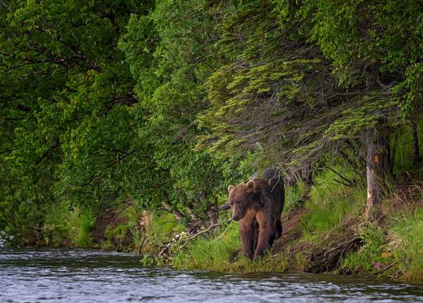 Bear Path Photography Art | Carol Brooks Parker Fine Art Photography